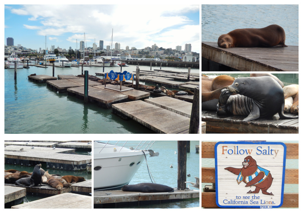 Asea lions